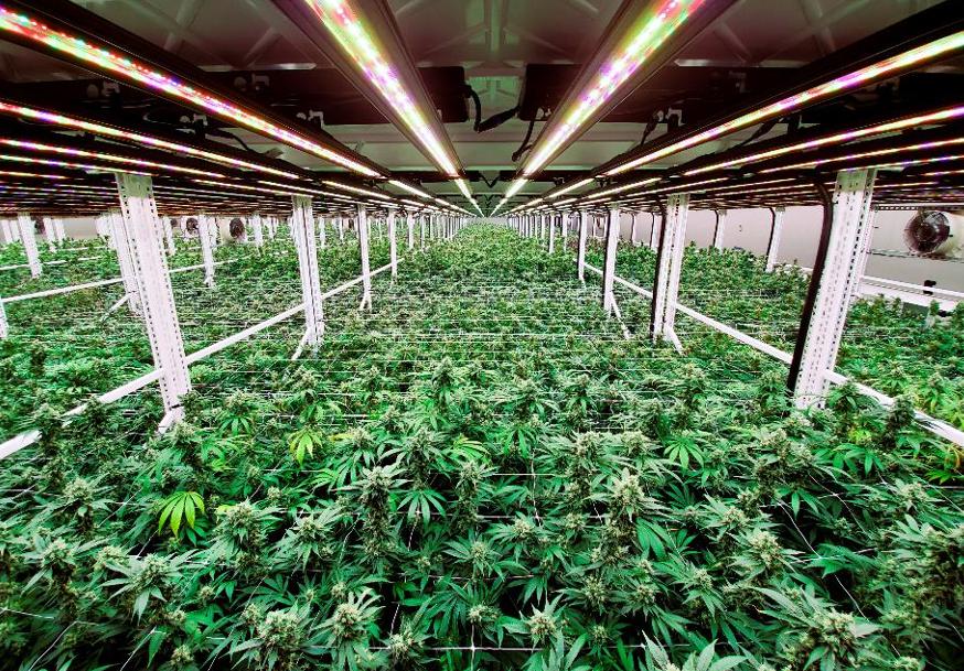 Indoor Cannabis Grow Facility